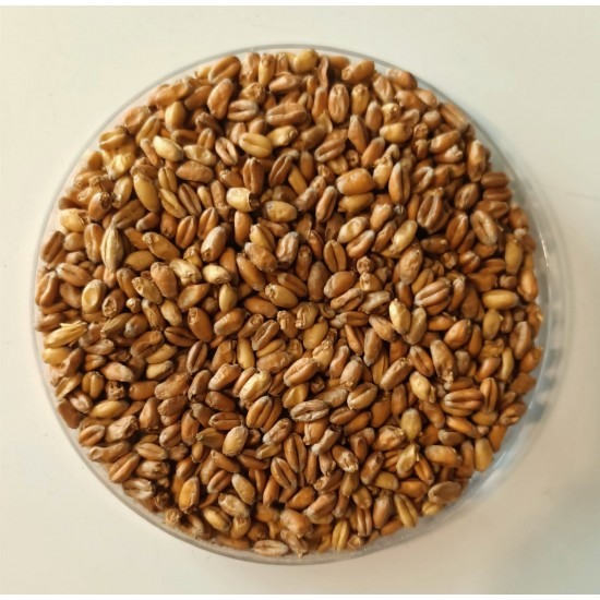 Wheat (Buğday) Malt 5 Kg